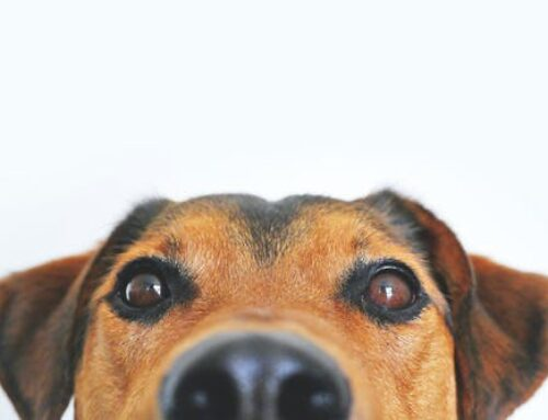 A Complete Guide to Holistic Pet Care