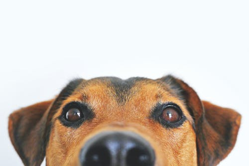 Reasons Your Dog Needs an Annual Checkup