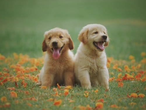 Why Proper Pet Care Is Important?
