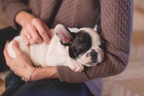 How to Take Care of Your Pet After a Surgery