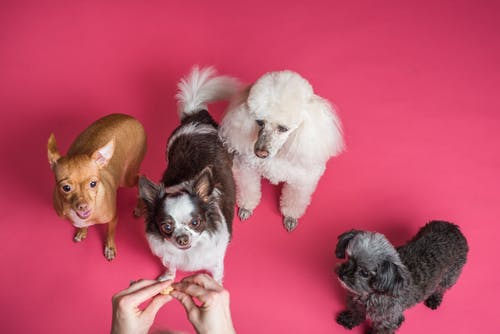 What Are the Key Points to Look For in a Puppy Daycare Facility?